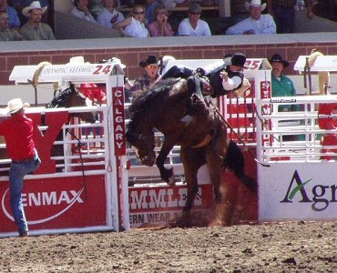 639px-StampedeRodeo2002